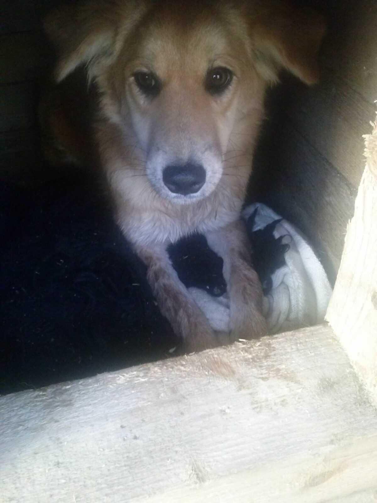 Даша, собака из Астрахани, была раздроблена бедренная кость